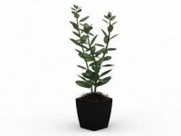 Indoor house plant in pot 3d model