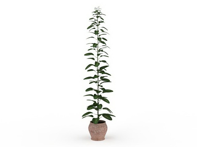 Tall Potted Plants 3d Model