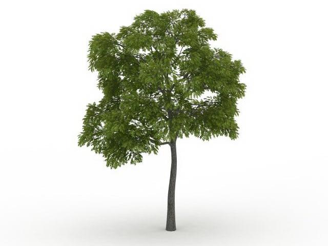 Eastern Black Walnut Tree 3d Model 3ds Max Files Free