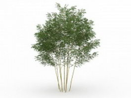 Phyllostachys bamboo 3d model