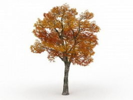 Autumn Platanus tree 3d model