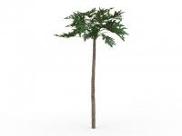 Papaya tree 3d model