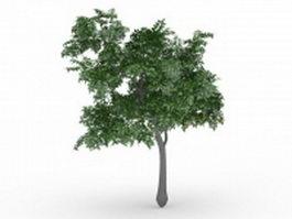 Lemon tree with fruit 3d model
