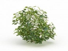 Green herb plants 3d model