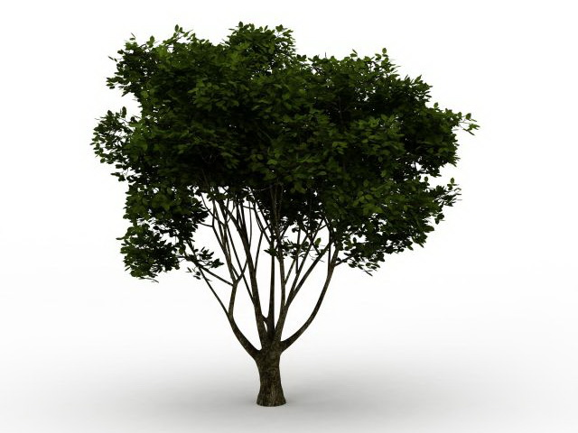 American Yew Tree 3d Model 3ds Max Files Free Download