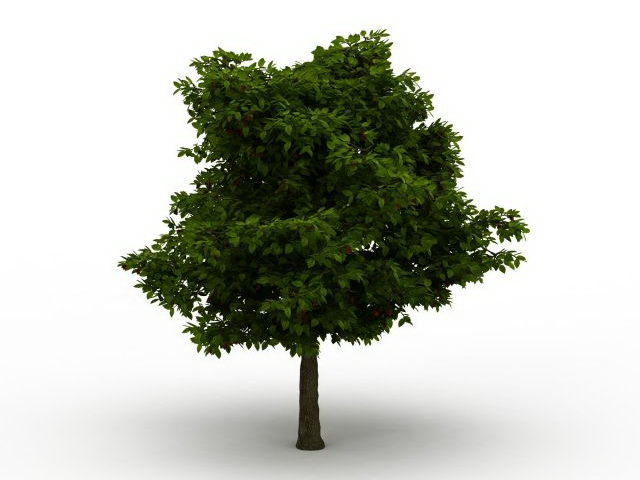 Common Deciduous Tree 3d Model 3ds Max Files Free Download