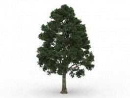 Cappadocian maple tree 3d model