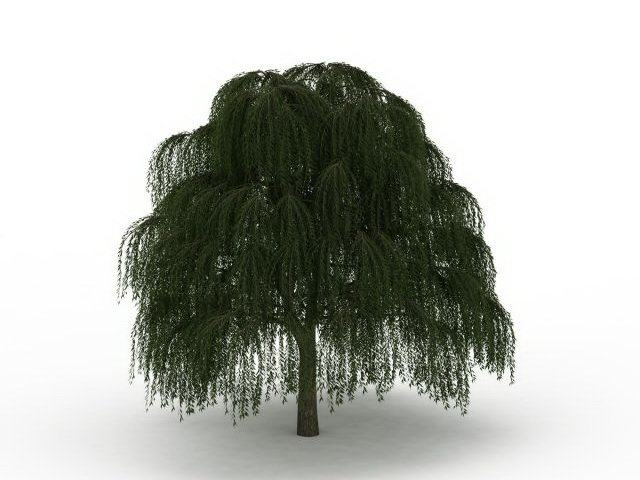 Babylon Weeping Willow Tree 3d Model 3ds Max Files Free