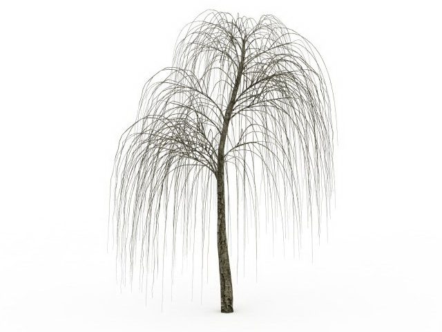 Bare willow tree 3d model 3ds max files free download ...