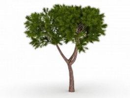 Moroccan cypress tree 3d model