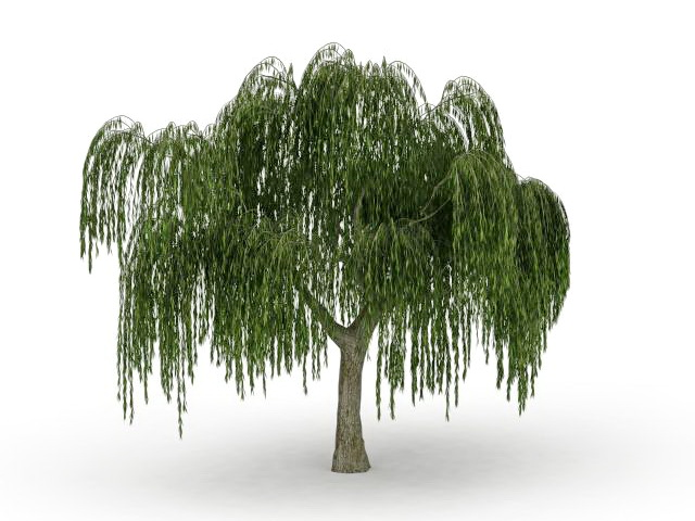 Large Weeping Willow Tree 3d Model 3ds Max Files Free