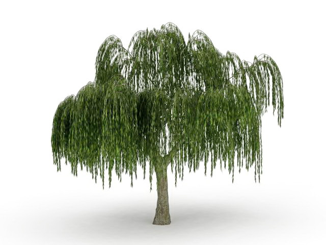 Large weeping willow tree 3d model 3ds max files free ...