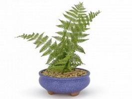 Fern in blue pot 3d model