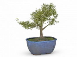 Bonsai tree in blue pot 3d preview