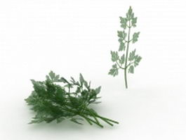 Flat leaf parsley 3d model