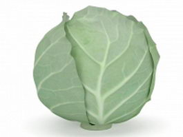 Green cabbage vegetable 3d model