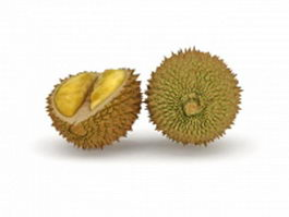 Durian fruit and open durian 3d model