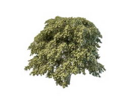 Staphylea bladdernut tree 3d preview