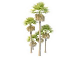 Tall and dwarf palmyra palm trees 3d model