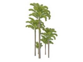 Foxtail palm tree 3d model
