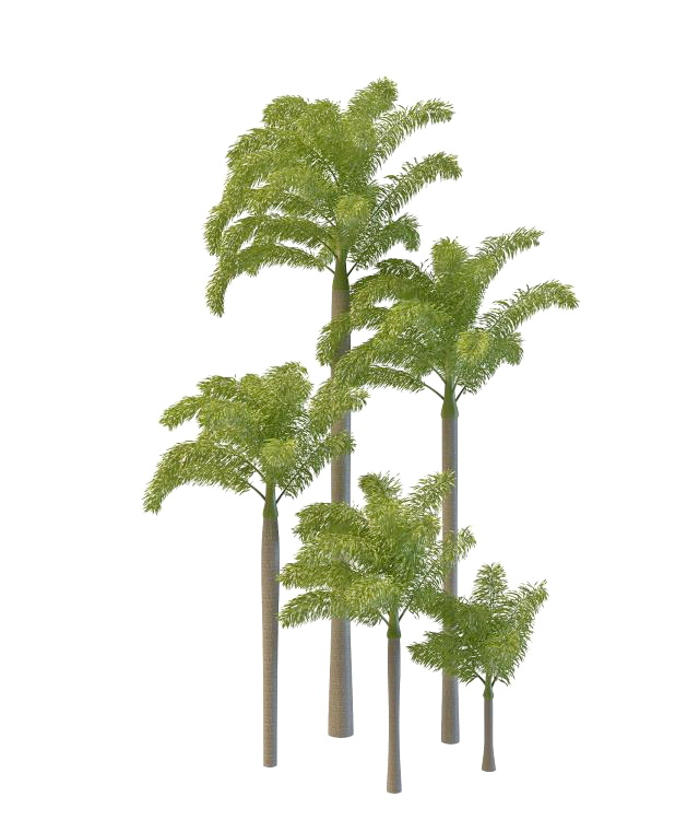 Foxtail Palm Tree 3d Model 3ds Max Files Free Download