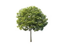 Yard ornamental tree 3d model