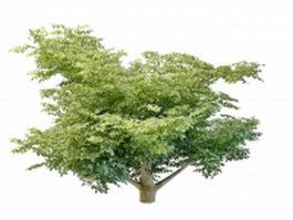 Variegated leaf tree 3d model