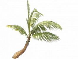 Betel palm tree 3d model