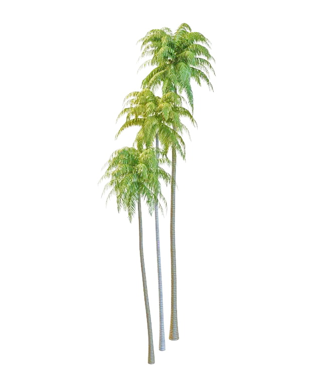 Coconut trees 3d model - CadNav