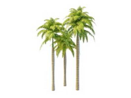 South America royal palms 3d model