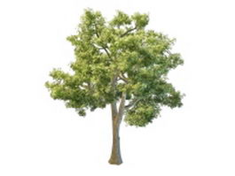 Giant ash tree 3d model