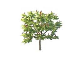 Staghorn sumac tree 3d model