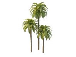 Phoenix date palm trees 3d model