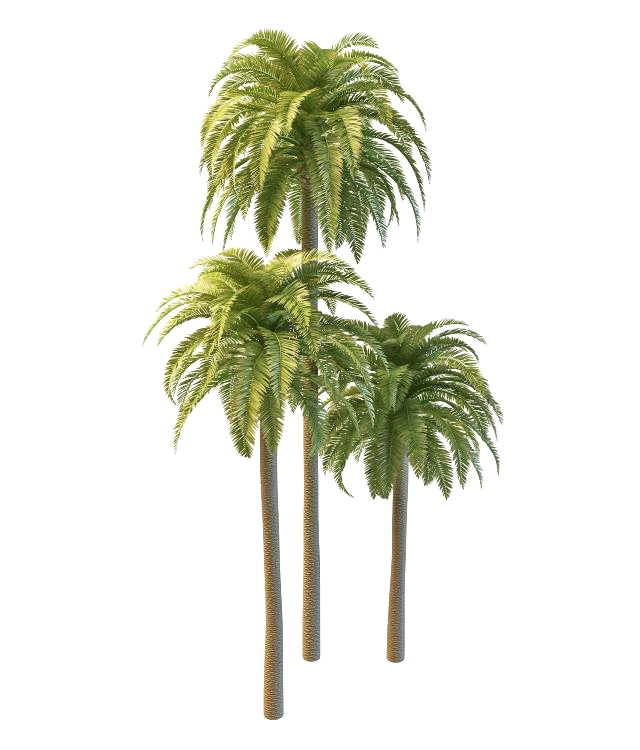 Phoenix date palm trees 3d model 3ds max files free download