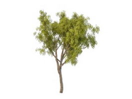 Korean mountain ash tree 3d model