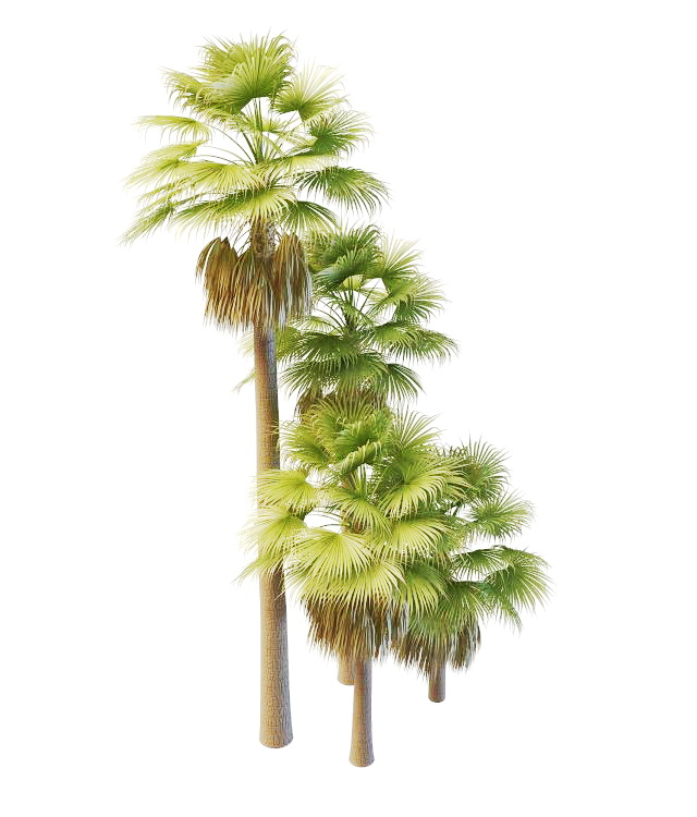Australia Palm Trees 3d Model 3ds Max Files Free Download