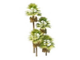 North America fan palms 3d model