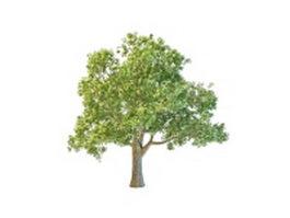 French oak tree 3d model