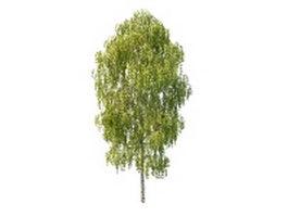 Japanese white birch tree 3d model