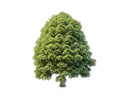 Alder tree 3d model