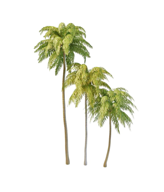 Island coconut palm tree 3d model 3ds max files free download