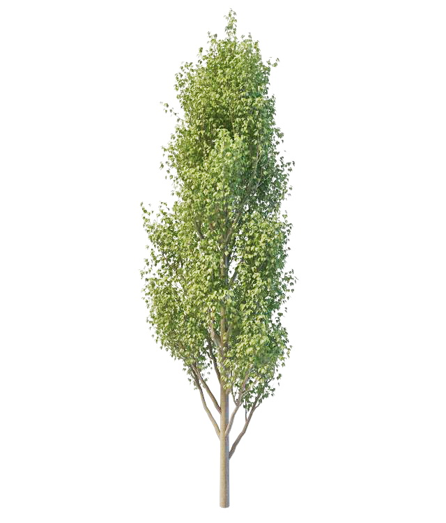 Italian Poplar Tree 3d Model 3ds Max Files Free Download