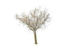 White maple tree 3d model