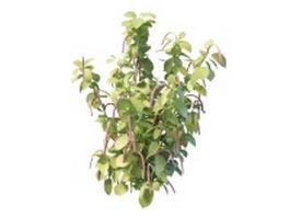 Flowering shrubs clusters 3d model