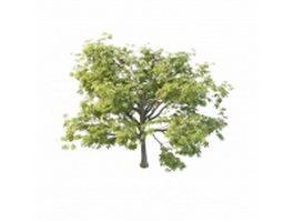 North America chestnut tree 3d model