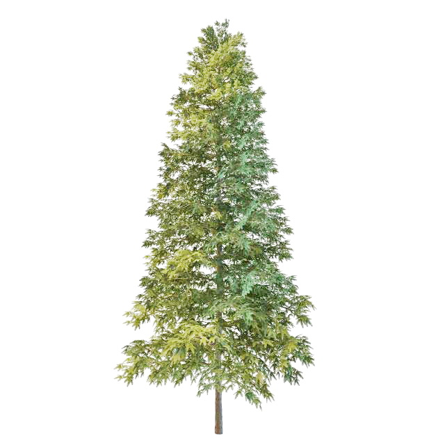 norway spruce christmas tree 3d model