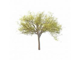 Budding tree in spring 3d model