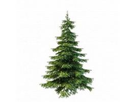 Picea glauca tree 3d model