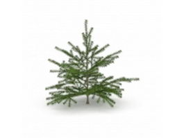 Canaan Fir Christmas tree 3d model