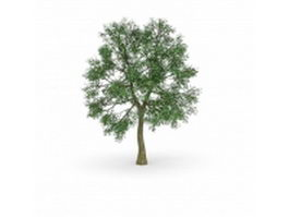 Horse chestnut tree 3d model